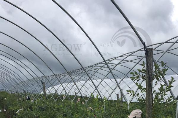 Quality Vineyard Fruit Zone Bird Protection Netting System