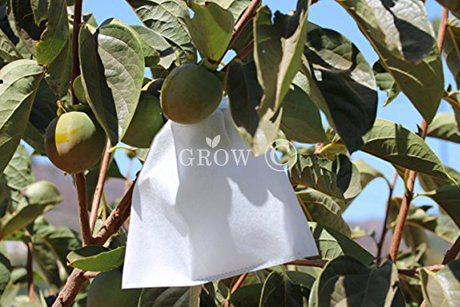 Orange Growing Bags