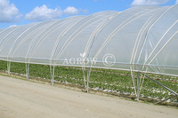 Single-bay Poly Tunnel