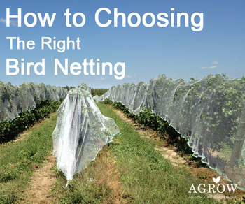 Tips To Choose The Right Hole Size Of Anti-Bird Netting