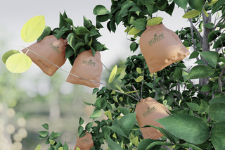 Apple Growing Bags
