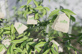 Peach Growing Bags